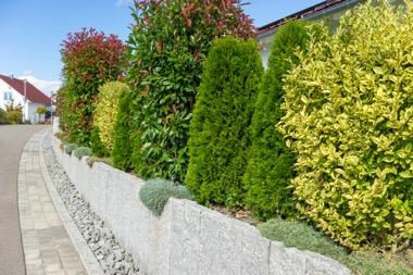 Fertighecke als Sichtschutz über der Gartenmauer