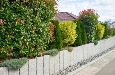 Fertige Heckenelemente im privaten Garten entlang der Mauer