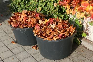Verwendung von Herbstlaub als Mulch